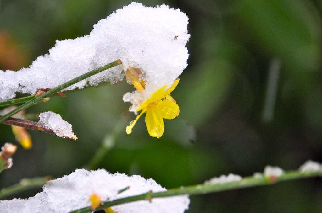Neve, 6 marzo 2012