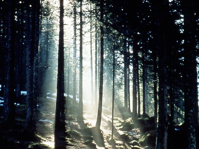 La foresta di Paneveggio.