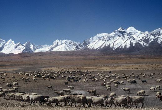 Che succede in Tibet?