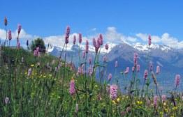 Montagna & biodiversità