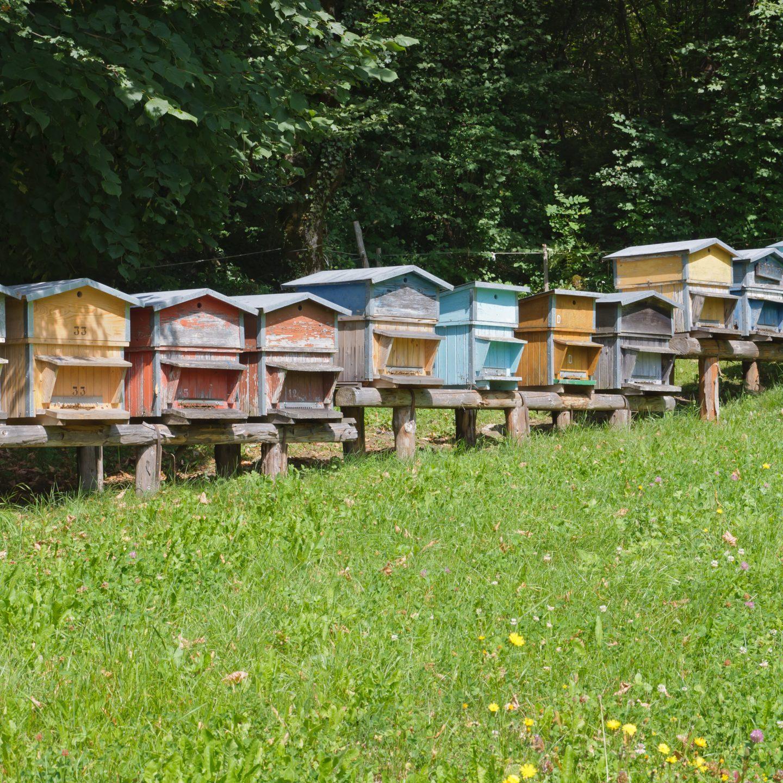 Ladri di miele