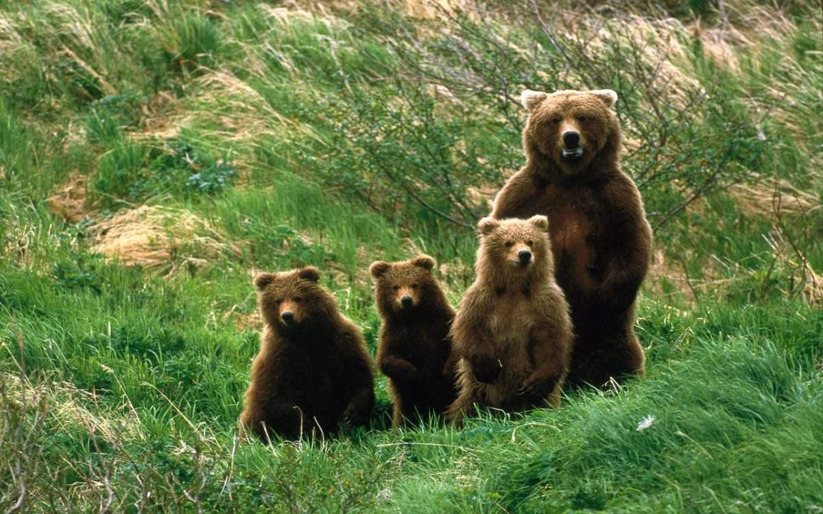 Il ritorno dell'orso
