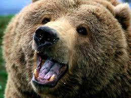 Vaga pelle dell'orsa